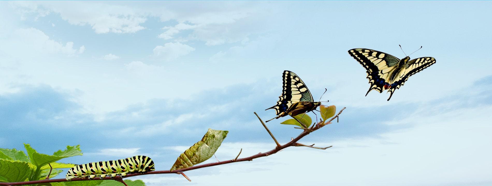 Partnering Organizational<br> Transformation